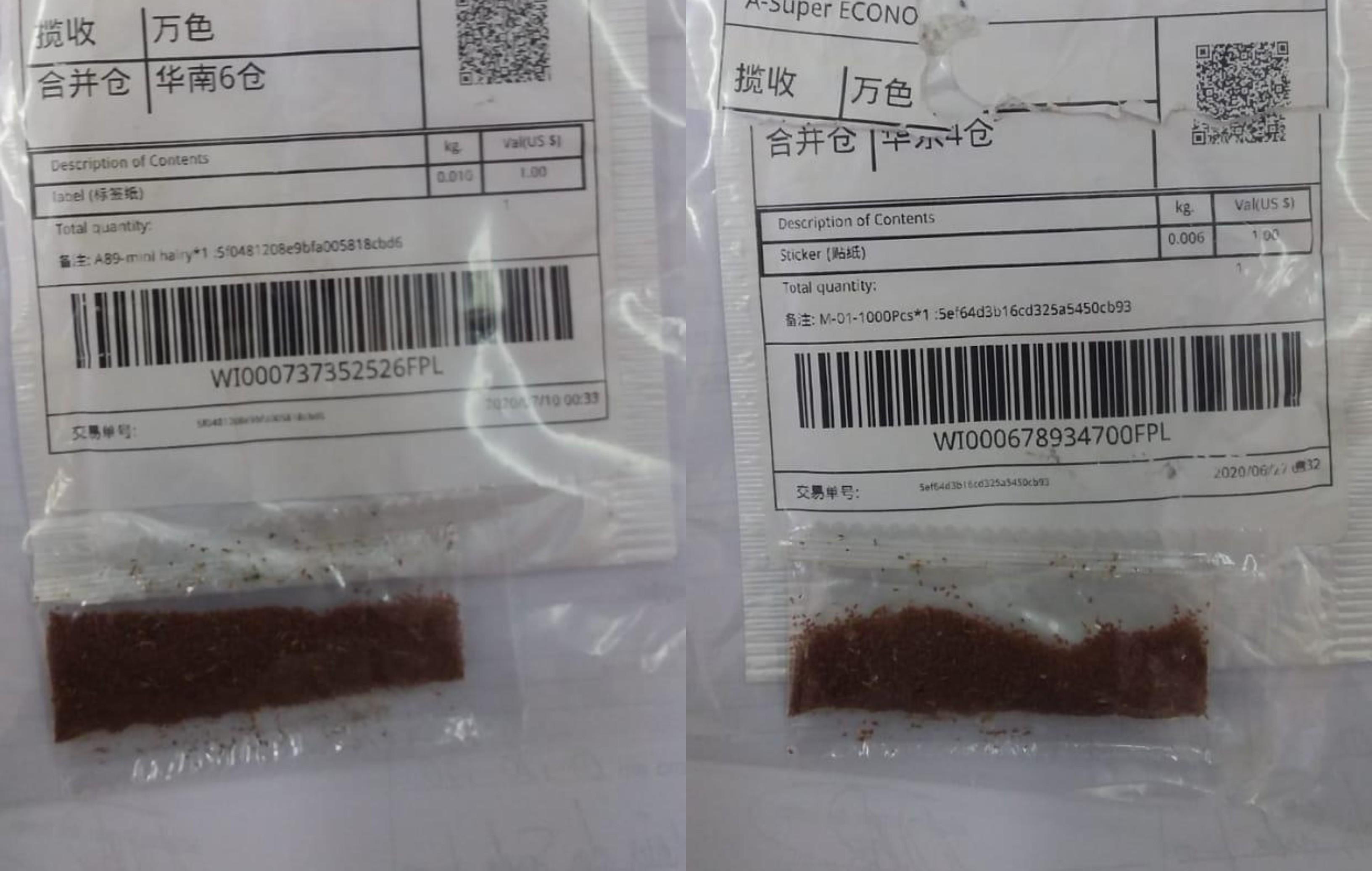 Governo já registra 525 casos de sementes misteriosas em todo o país